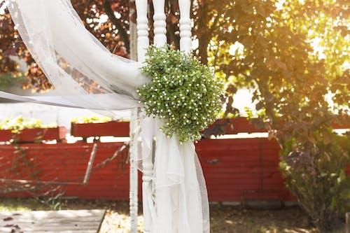 Foto d'estoc gratuïta de amor, arbres, blanc, boda