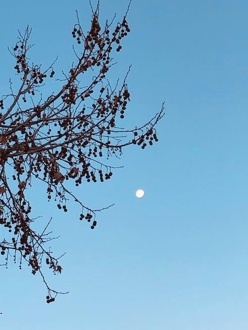 낮에는 하늘에있는 달, 달의 무료 스톡 사진