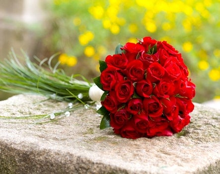 Free stock photo of red, roses, fix, wedding