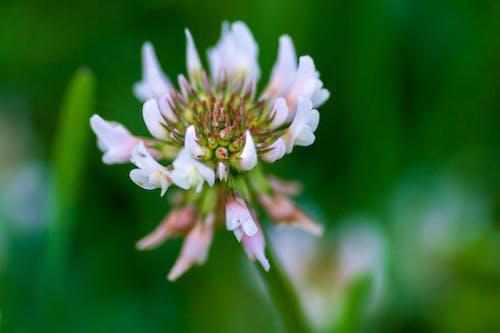 Foto d'estoc gratuïta de a l'aire lliure, amant de la natura, bellesa a la natura, flor