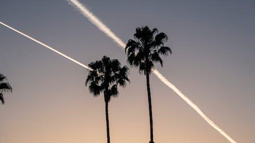 Darmowe zdjęcie z galerii z drzewo palmowe, palmy, sylwetka, zachód słońca