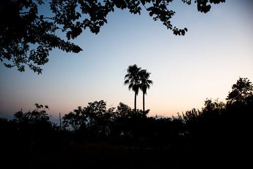 Ảnh lưu trữ miễn phí về bầu trời, bụi cây, cây, cây cọ