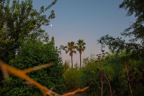 Photos gratuites de arbres, botanique, buisson, centrale