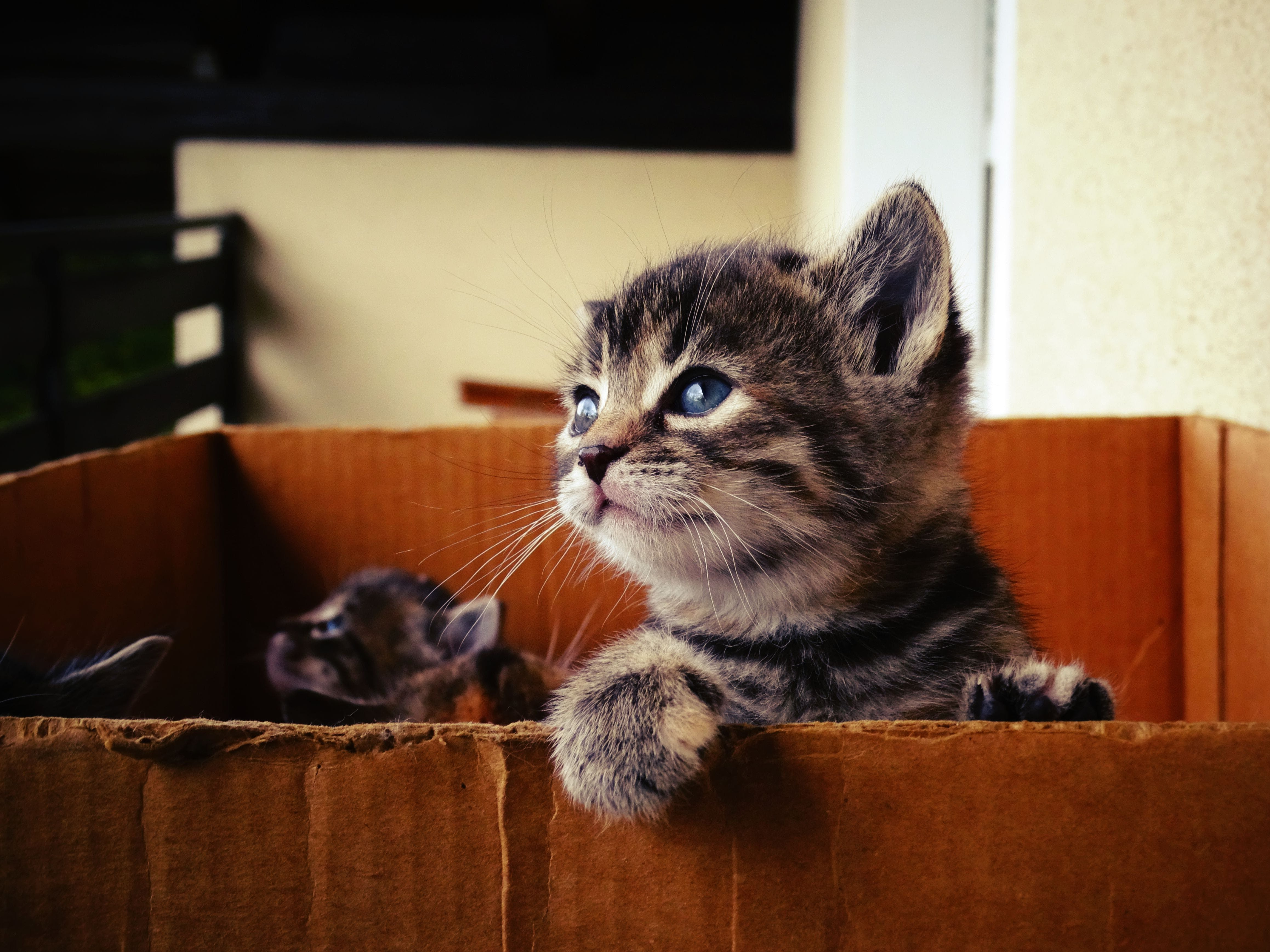 Free stock photo of pet, view, sweet, domestic cat