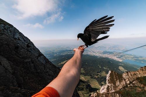 Foto d'estoc gratuïta de au, cel, muntanya, paisatge