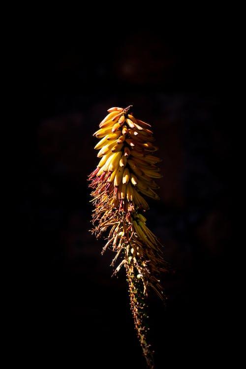 Closeup Photo of Banana Fruit