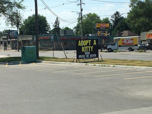 Foto d'estoc gratuïta de adopte un gatet, carretera, ciutat, signe
