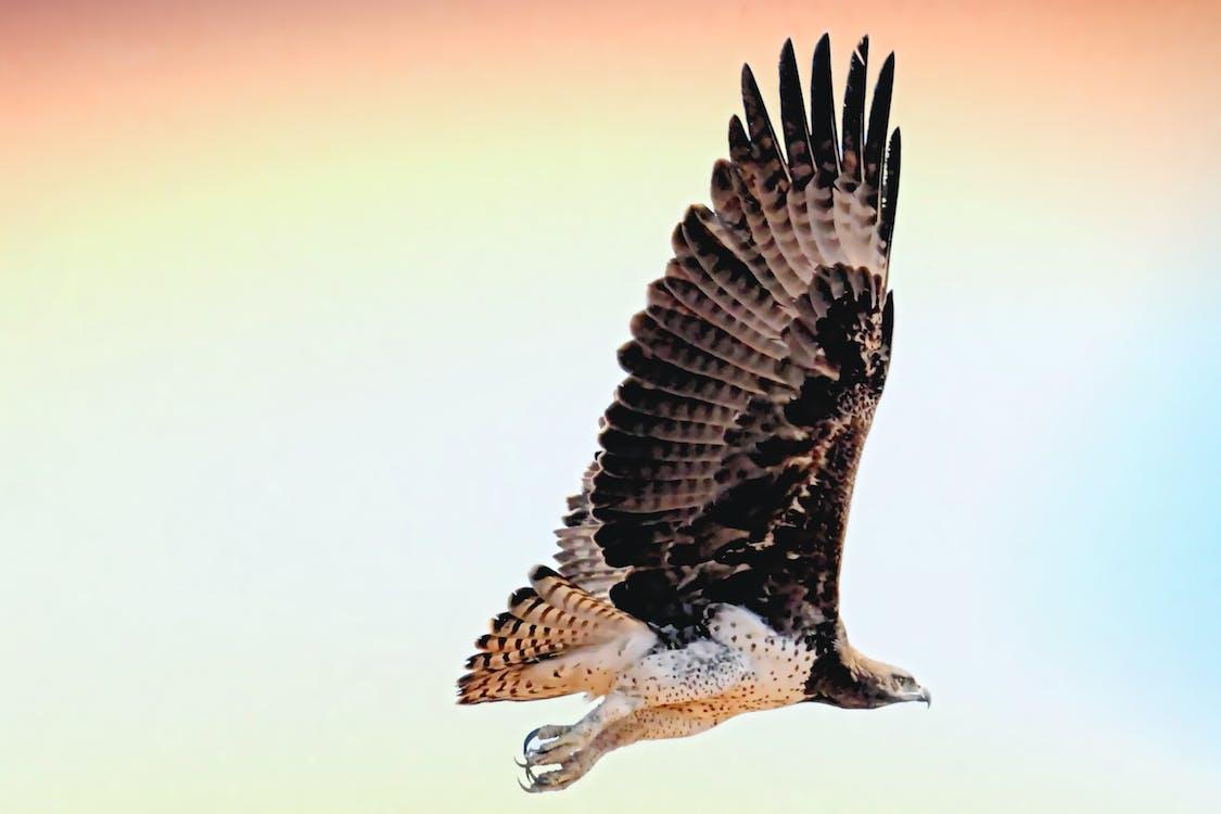 midair, άγρια φύση, άγριος