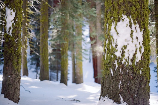 Free stock photo of snow, forest, trees