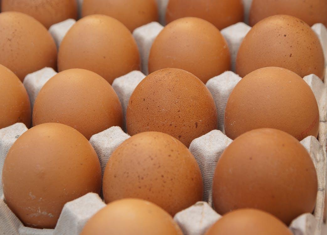 Free stock photo of egg carton, eggs, hen