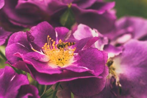 곤충, 곤충학, 꽃, 꽃가루의 무료 스톡 사진