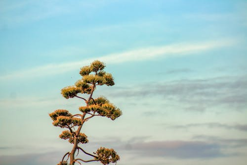 Immagine gratuita di agave americana, aloe americano, anno, attraente