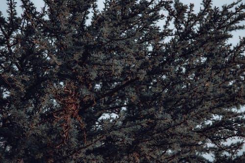 Immagine gratuita di acqua, albero, all'aperto, ambiente