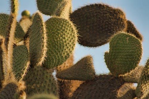 Základová fotografie zdarma na téma barvy, bledý, čerstvý, kaktus