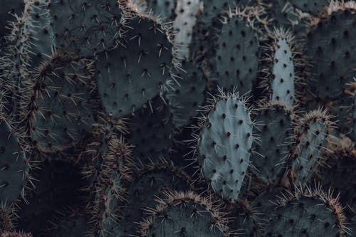Gratis lagerfoto af close-up, grøn, kaktusplanter, pigge