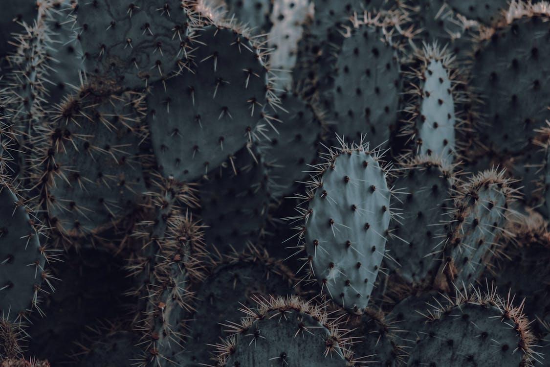 cactus, columnes vertebrals, creixement