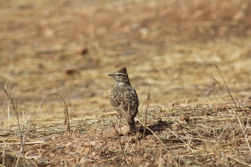 Photos gratuites de ailes, alerte, animal, animal sauvage