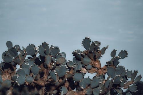 Immagine gratuita di agricoltura, azzurro, bellezza, botanica
