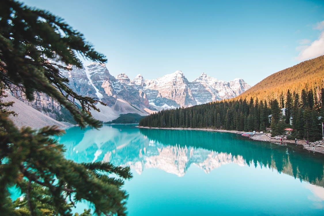 Alberta, bartrær, canada