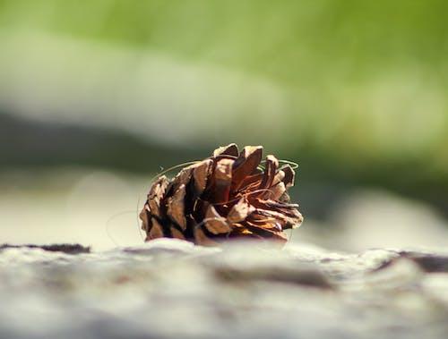 Foto d'estoc gratuïta de bokeh, formigó, pinya de pi