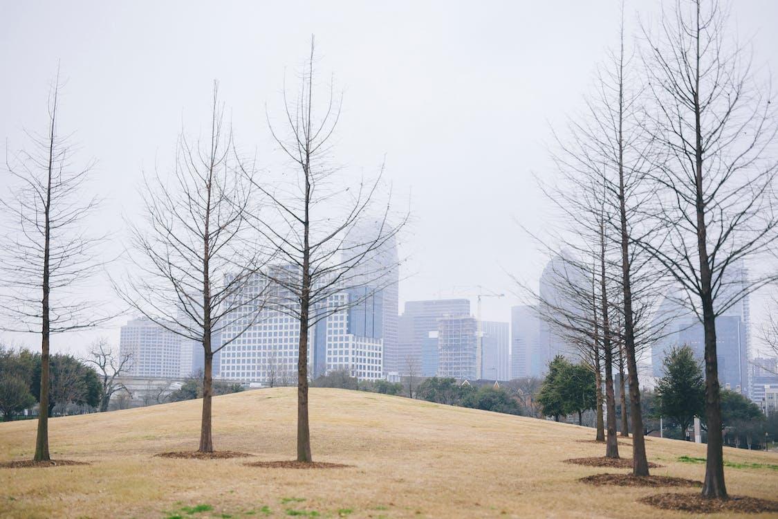 arbres, arrière-plan, aube