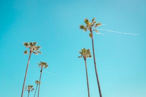 Δωρεάν στοκ φωτογραφιών με ανάπτυξη, γαλάζιος ουρανός, δέντρα, δέντρα καρύδας