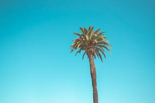 açık hava, ada, ağaç, arka fon içeren Ücretsiz stok fotoğraf
