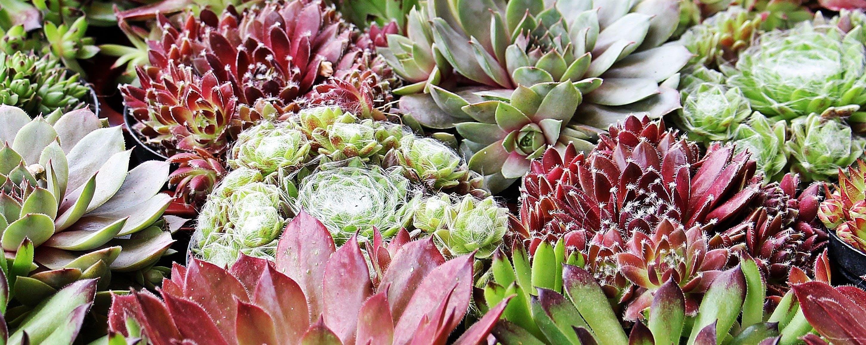 Free stock photo of summer, garden, plant, spring