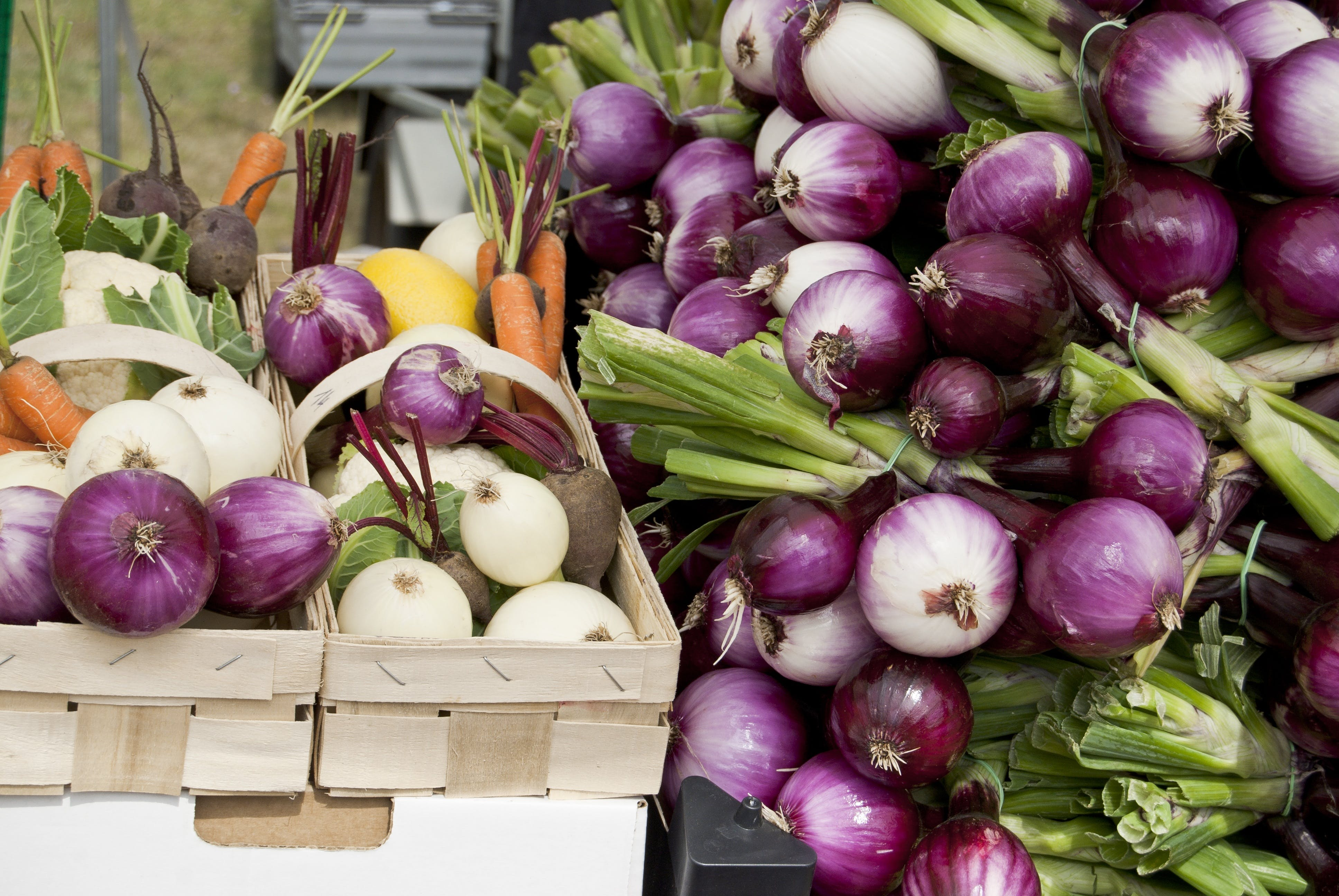 Free stock photo of vegetables, vegetarian, onion, carrots