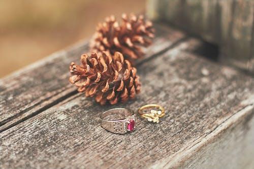 사랑, 약혼, 약혼 반지, 제안하다의 무료 스톡 사진