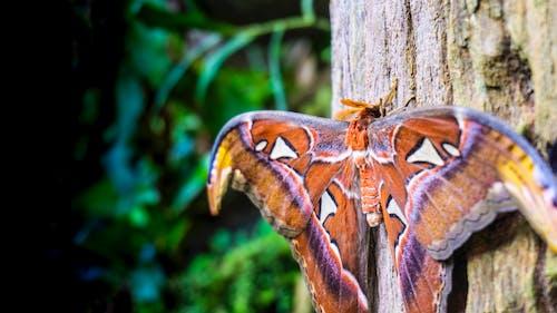Безкоштовне стокове фото на тему «Метелик»