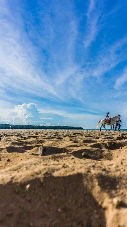 Безкоштовне стокове фото на тему «#sand, #sky, #пляжний, кінь»