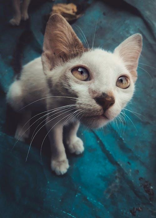 Foto profissional grátis de # 4wallpaper, # huaweinova3i, #desafiodemobilidade, #gato