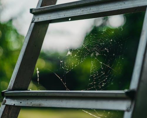 Δωρεάν στοκ φωτογραφιών με δίχτυ αράχνης, ιστός αράχνης, παγίδα