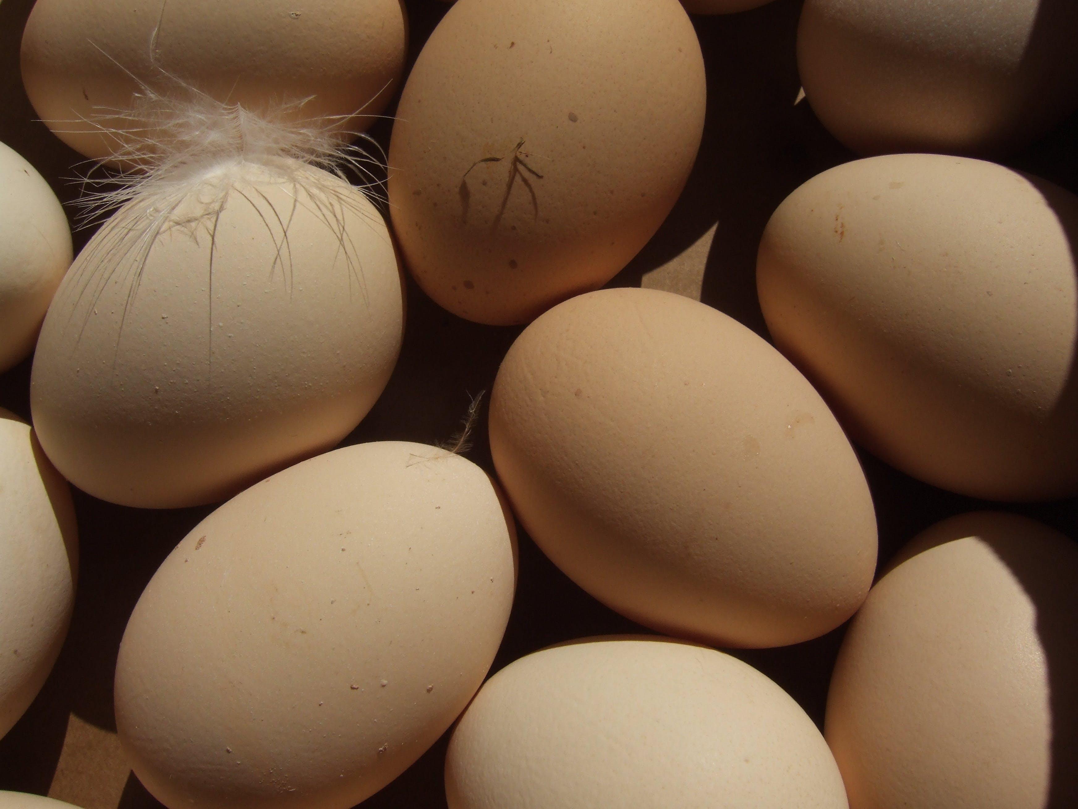 Free stock photo of bio, eggs, field, market
