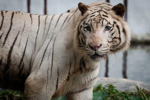 Foto stok gratis binatang, binatang buas, fokus selektif, fotografi binatang