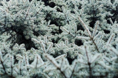 Photos gratuites de branches, fond d'arbre, fond d'arbres, fond d'hiver
