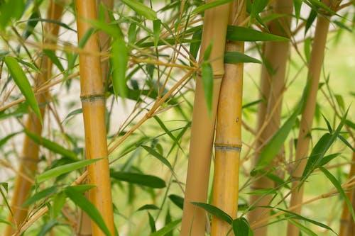 Kostnadsfri bild av bambu, botanik, botanisk, löv