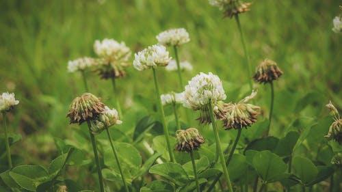 Photos gratuites de centrale, centrales, clairière, fleur