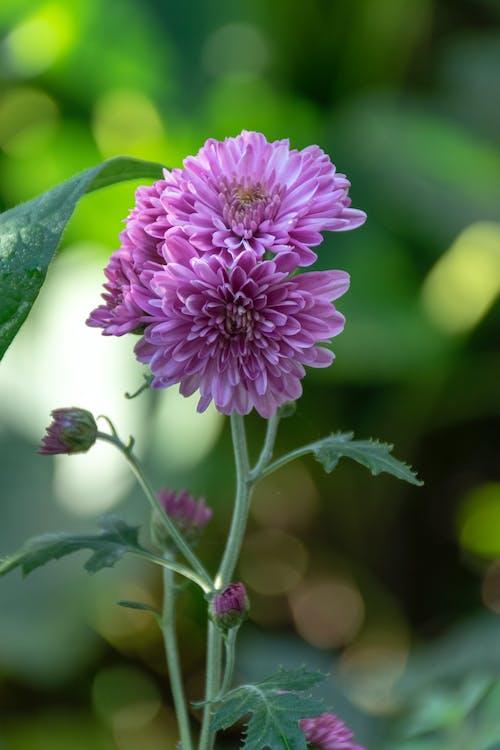 園林花卉, 花 的 免费素材照片