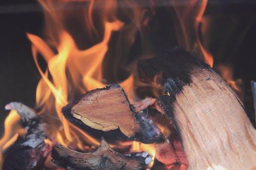 Fotobanka sbezplatnými fotkami na tému horenie, les, oheň, plameň