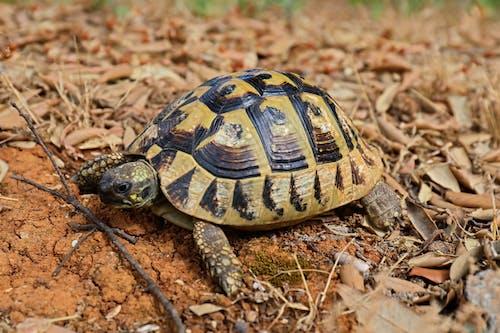 Kostenloses Stock Foto zu schildkröte