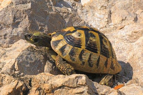 Kostenloses Stock Foto zu krug, schildkröte