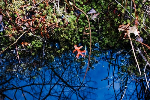 Ingyenes stockfotó kék, levelek, szépség a természetben, természet témában