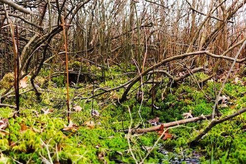 Gratis stockfoto met droge natuur, gedroogde bomen, groen, groen mos
