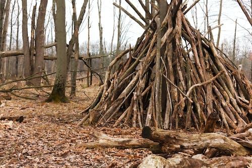 Безкоштовне стокове фото на тему «Деревина, ліс, моторошний, сушені ліси»