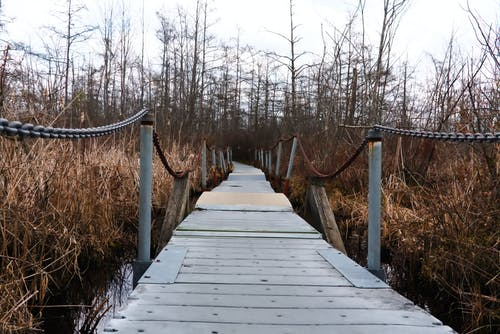 Gratis stockfoto met brug, brug in de natuur, dode aard, eng