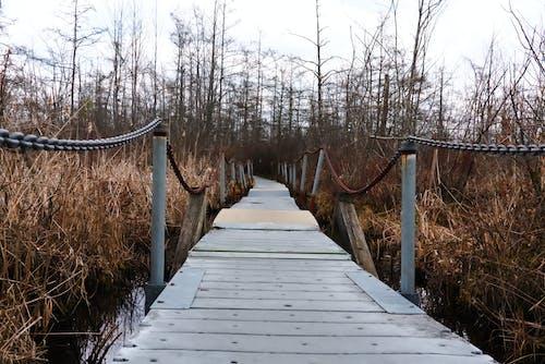 Безкоштовне стокове фото на тему «весна, зима, мертва природа, міст»