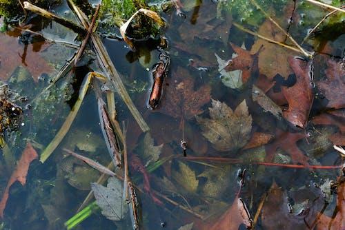 Gratis stockfoto met bladeren, h2o, herfstbladeren, kleuren