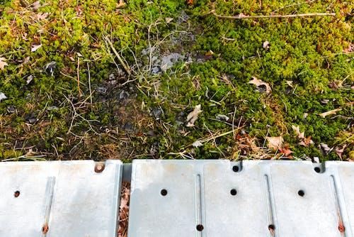 Безкоштовне стокове фото на тему «весна, зелений, зелений мох, мох»